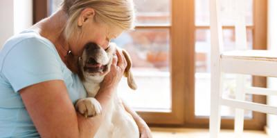 5 Ways to Cope When Your Pet's Having Medical Issues  , Baraboo, Wisconsin
