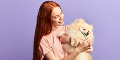 A Guide to Pet Dental Care, Buckeye Lake, Ohio