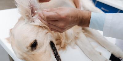 A Columbia Veterinarian Shares 3 Tips for Cleaning Your Dog's Ears, Clarksville, Maryland