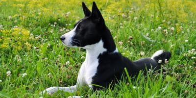 Why Spring Is the Perfect Time to Step Up Flea & Tick Prevention, Sycamore, Ohio
