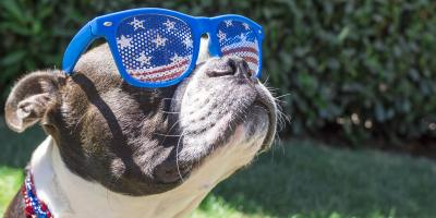 Ensure Your Pets Have a Happy 4th With These Tips, Columbia, Missouri