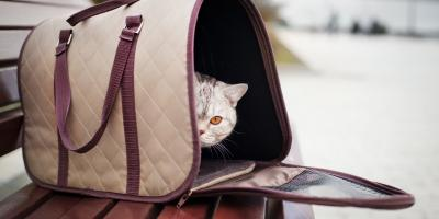 How to Get Your Cat into Their Carrier, Elkton, Maryland