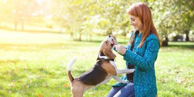 Ohio Veterinarian Explains 3 Reasons Exercise With Your Dog Is Important, Elyria, Ohio