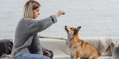 The Do's & Don'ts of Effective Dog Training, Florence, Kentucky