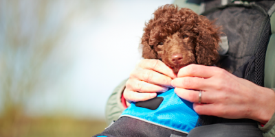 5 Ways to Prepare Pets for the Veterinarian's Office, Foley, Alabama