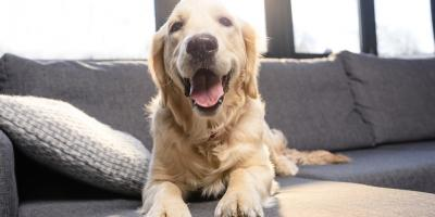 A Veterinarian's Guide to Bad Breath in Dogs, Foley, Alabama