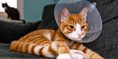 How to Prepare Your Pet for Surgery, High Point, North Carolina