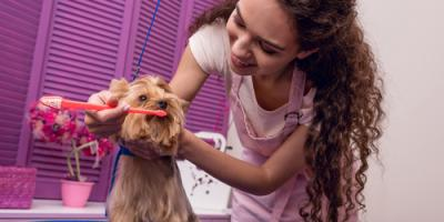 Honolulu Veterinarian Shares 7 Simple Steps to Brushing Your Dog's Teeth, Honolulu, Hawaii