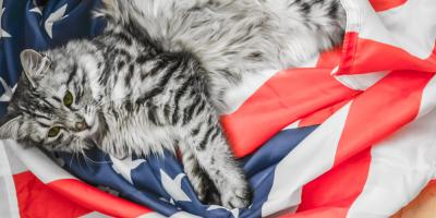 Veterinarian Do's & Don'ts for Fourth of July Pet Safety, Perry, Georgia