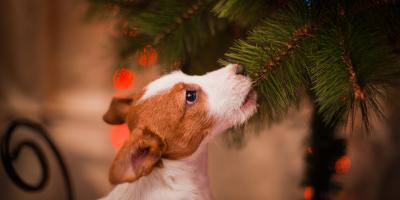 5 Holiday Plants That Are Toxic for Pets , Shelby, Wisconsin
