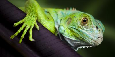 Your Guide to Buying an Exotic Pet, Lincoln, Nebraska