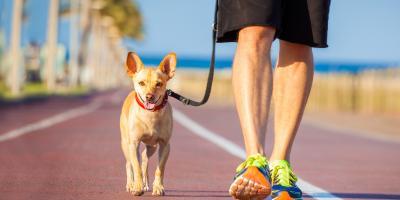 5 Tips to Improve Your Dog Walks, Ewa, Hawaii
