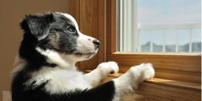 How to Reduce Your Dog's Separation Anxiety, Rosenberg-Richmond, Texas