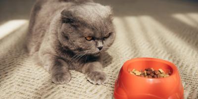 Why Isn't My Pet Eating?, Versailles, Kentucky