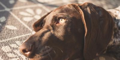 Veterinarian Explains 3 Signs of Chronic Pain in Pets, Wahiawa, Hawaii