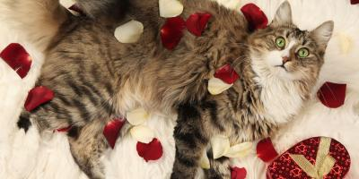 Why Your Pets Should Get a Little Extra Love This Valentine's Day, Ewa, Hawaii