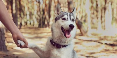 FAQ About Online Pharmacies for Your Pet's Medications, Perry, Georgia