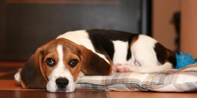 5 Signs Your Pet Should See a Veterinarian, Amsterdam, Virginia