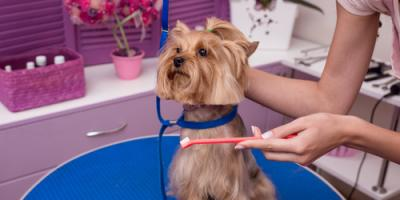 Why It's Important to Include Teeth in Your Pet Care Routine, Elyria, Ohio