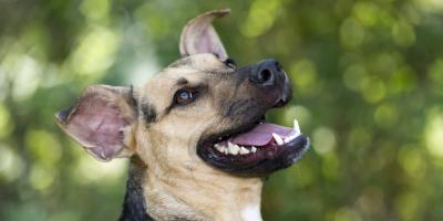 A Veterinarian's Guide to Dental Care for Pets, Buckeye Lake, Ohio
