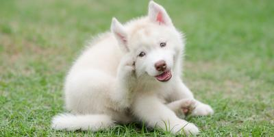 5 Signs Your Pet Is Having an Allergic Reaction, Kabletown, West Virginia