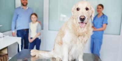 How to Calm an Anxious Pet at the Veterinarian, Columbia, Missouri