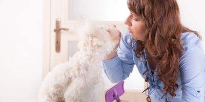 When to See a Veterinarian About Your Pet's Shedding, Middlefield, Ohio