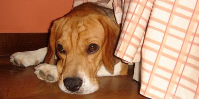 Is Your Dog Experiencing Anxiety? , Denver, Colorado