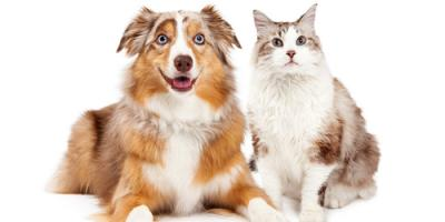 Top 3 FAQs a Veterinarian Is Asked About Pets, Elk Grove, California