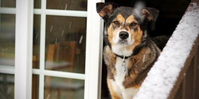 3 Ways to Protect Pets During Severe Weather, Wentzville, Missouri