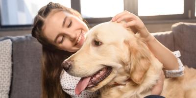 An Introduction to Heartworm Disease in Dogs, Middlefield, Ohio