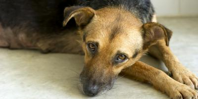 5 Tips Veterinarians Recommend for Helping Your Pet Overcome Anxiety, Honolulu, Hawaii