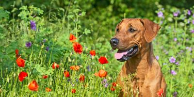 3 Spring Plants Your Veterinarian Wants Pets to Avoid, Buckeye Lake, Ohio
