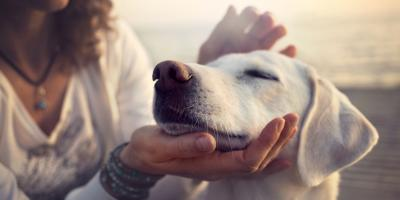 3 Reasons to Spay or Neuter Your Pet, Mineral Springs, North Carolina