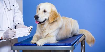 3 Questions to Ask Your Veterinary Care Provider, Sycamore, Ohio