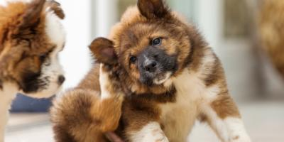 3 Times When You Should Bring Your Pet to a Veterinary Dermatology Specialist, Honolulu, Hawaii