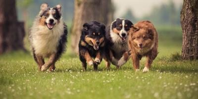 Veterinary Clinic Shares 4 Tips to Help You Protect Your Dog From Canine Influenza, Prairie du Chien, Wisconsin