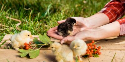 3 Diseases Birds Can Transmit to Humans, Wahiawa, Hawaii