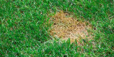 How to Repair Bald Spots in Your Lawn, Wahiawa, Hawaii