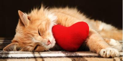 Why You Should Love Your Pet This Valentine's Day, Wahiawa, Hawaii