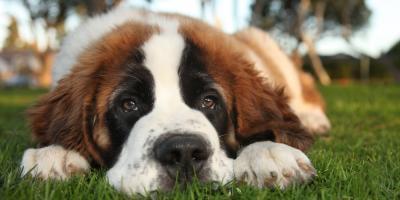 Veterinarian Advice on How to Stop Diarrhea in Dogs, Wahiawa, Hawaii