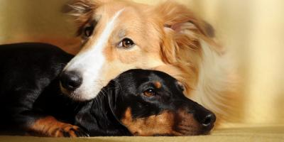 3 Tips to Prepare Your Dog or Cat for Pet Boarding, Wahiawa, Hawaii