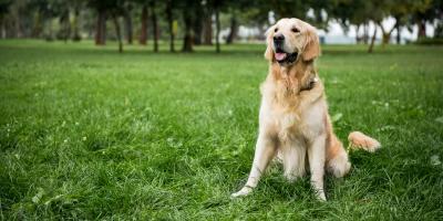 3 Lawn Care Tips to Keep Your Pets Safe, Waialua, Hawaii