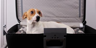 5 Tips to Calm Pet Boarding Anxiety, Wailuku, Hawaii
