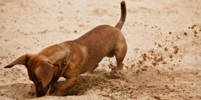 A Guide to Understanding Common Dog Behaviors, Ewa, Hawaii