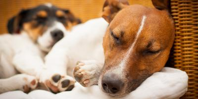 3 Ways to Calm Your Pet on New Year's Eve, Ewa, Hawaii
