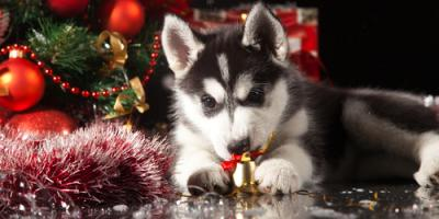Prioritize Pet Health This Holiday Season With These 3 Safety Tips, Ewa, Hawaii