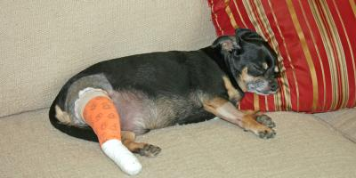 A Veterinary Hospital Explains How to Care for Your Pet After Surgery, Ewa, Hawaii