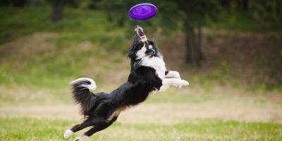 Dog Care Experts: 5 Safe Outdoor Activities for Your Dog, Ewa, Hawaii