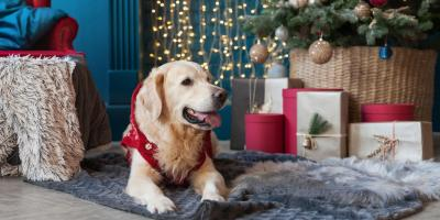 Do's & Dont's for Pet-Friendly Holiday Decorating, Ewa, Hawaii